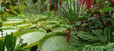 Jardin botanique du Montet, à Nancy (54)