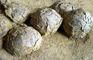 Oeuf de dinosaures trouvés dans le parc départemental de Roques-Hautes (13)