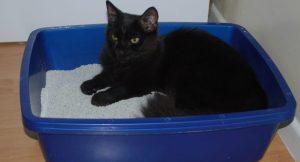 Un chat noir dans son bac à litière