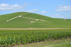 Un coteau (pente de colline occupée par un vignoble)