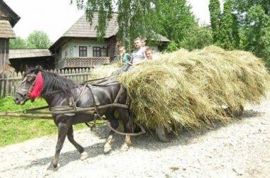 Un cheval noir traînant une charrette de foin