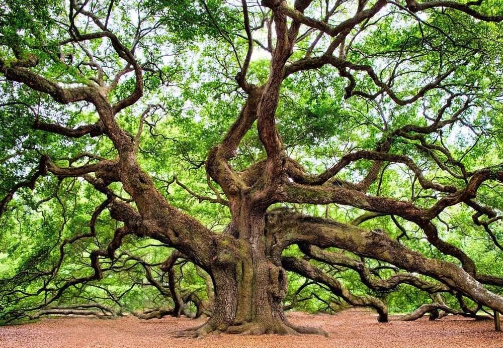 Arbre aux branches tordues