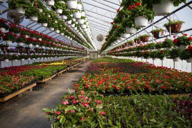 Serre horticole