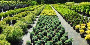 Stockage de plantes et d'arbustes d'ornement chez un horticulteur
