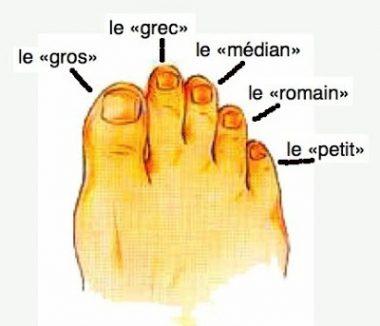 """Les noms usuels des orteils ou """"doigts de pied"""""""