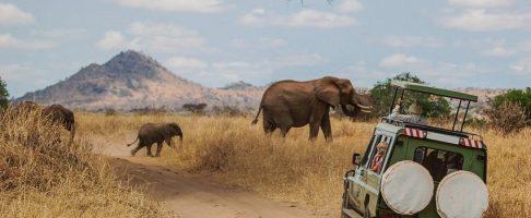 Un safari photo en Afrique