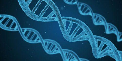 Molécules d'ADN (Acide DésoxyriboNucléique)