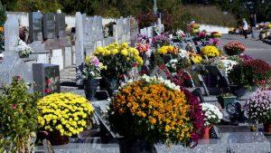 """Le chrysantème """"roi des cimetières"""""""