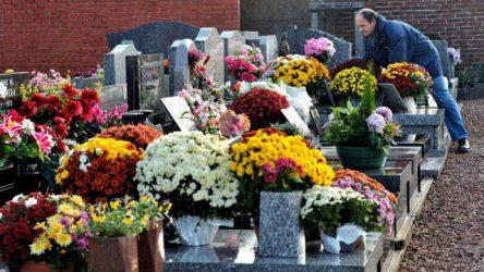 """""""La plante des cimetières"""" : le chrysantème"""