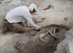 Le dégagement d'un squelette par un archéologue.