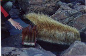 Des fanons de baleine, échoués sur des rochers