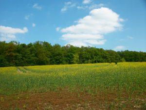 Un champs à l'orée d'une forêt