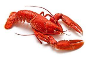 Un homard