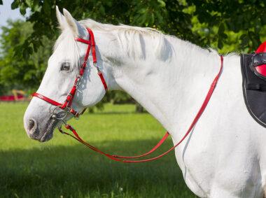 Un cheval blanc, la bride sur le cou